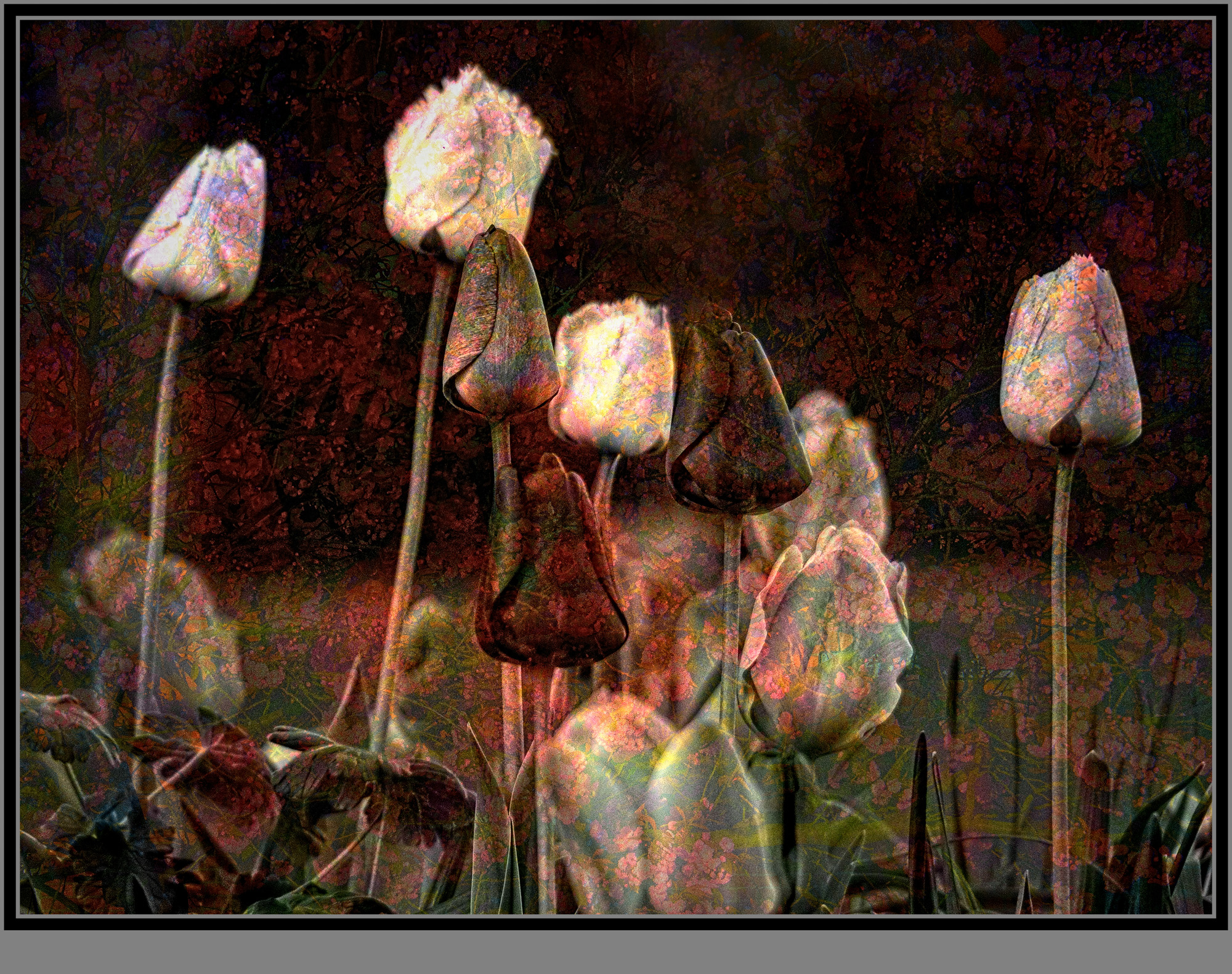 Mad about tulips ©Stewart Wall 2020